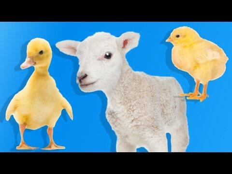 Yavru Çiftlik Hayvanlarını Öğreniyoruz   Çocuklar İçin Hayvanlar   Eğitici Video