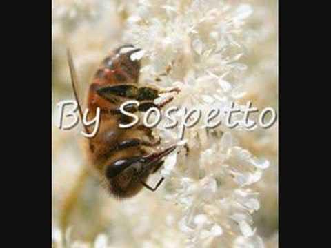 Çoçuk Şarkıları – Çalışkan Arı