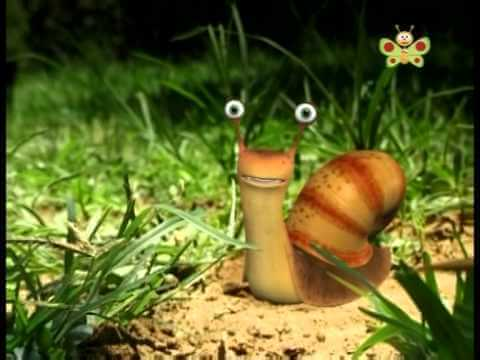 Mr. Snail. BabyTV
